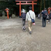 霧島神宮の写真・動画_image_356904
