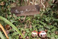 猫の細道の写真・動画_image_357144