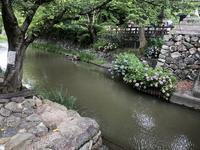 八幡堀の写真・動画_image_361977
