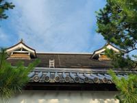 妙心寺の写真・動画_image_363515