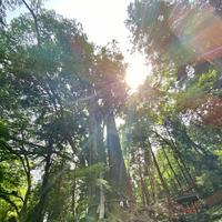 貴船神社 奥宮の写真・動画_image_366017