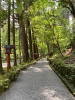 貴船神社 奥宮の写真・動画_image_366019