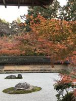 龍安寺の写真・動画_image_372976