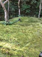 祇王寺の写真・動画_image_375853