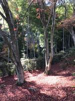 常寂光寺の写真・動画_image_375893