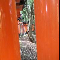 伏見稲荷大社の写真・動画_image_376961