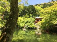 醍醐寺の写真・動画_image_378041