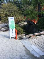 下鴨神社(賀茂御祖神社)の写真・動画_image_384017
