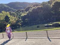 天龍寺の写真・動画_image_385712