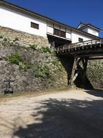 彦根城の写真・動画_image_390638