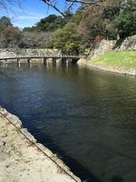 彦根城の写真・動画_image_390640