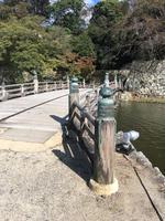 彦根城の写真・動画_image_390641