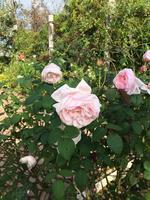 神奈川県立花と緑のふれあいセンター 花菜ガーデンの写真・動画_image_391869