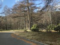 中禅寺湖の写真・動画_image_395983