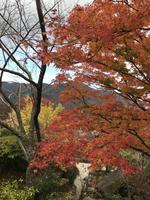 箱根強羅公園の写真・動画_image_399727