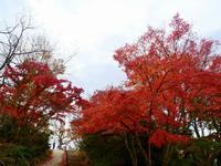 高尾山の写真・動画_image_405239