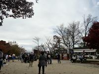 高尾山の写真・動画_image_405242