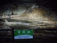 秋芳洞の写真・動画_image_413278