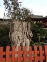 鶴岡八幡宮の写真・動画_image_413463