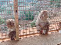嵐山モンキーパークいわたやまの写真・動画_image_414505