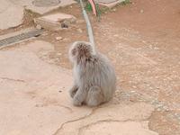 嵐山モンキーパークいわたやまの写真・動画_image_414506