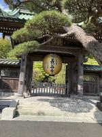 長谷寺の写真・動画_image_422071