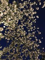 元離宮 二条城の写真・動画_image_425786