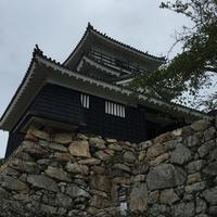 浜松城の写真・動画_image_426681