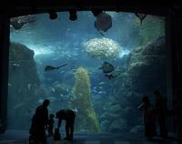 新江ノ島水族館の写真・動画_image_429443