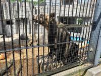 旭川市 旭山動物園の写真・動画_image_431606