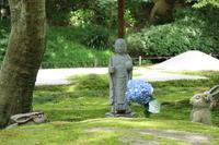 明月院(あじさい寺)の写真・動画_image_433577