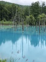 青い池の写真・動画_image_437000
