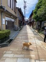 ひがし茶屋街の写真・動画_image_444958