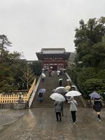 鶴岡八幡宮の写真・動画_image_454589