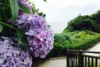 稲村ケ崎海浜公園の写真・動画_image_85074