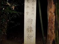 シガイの森の写真・動画_image_87308