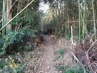 シガイの森の写真・動画_image_87317