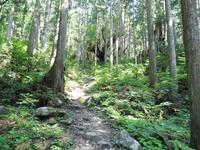 21世紀の森の写真・動画_image_87419