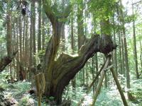 21世紀の森の写真・動画_image_87420