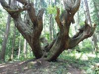21世紀の森の写真・動画_image_87476