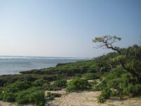 久高島の写真・動画_image_89441