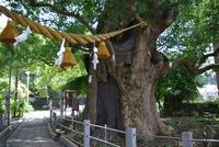 山王神社の写真・動画_image_92228