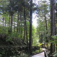 赤沢自然休養林の写真・動画_image_96469