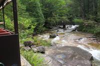 赤沢自然休養林の写真・動画_image_96471
