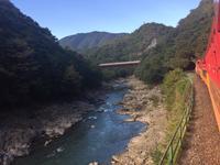 嵯峨野トロッコ列車の写真・動画_image_98428
