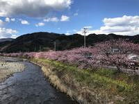 河津川の写真・動画_image_220429