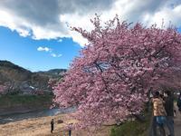 河津川の写真・動画_image_220430