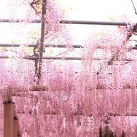 曼陀羅寺の写真・動画_image_234037