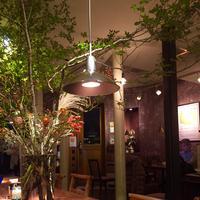 カフェマメヒコ 三軒茶屋本店(CAFE Mame-Hico)の写真・動画_image_274908