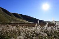 曽爾高原の写真・動画_image_277303